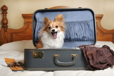 dog-ready-for-vacation.jpg